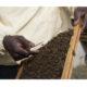 Terragiusta, progettoMeduin Calabria contro la schiavitù: sulle orme del modello Bee My Job