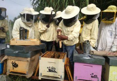 A scuola di pappa reale con Bee My Job, grazie a Intesa San Paolo