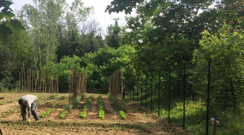 Furti all'orto urbano: il danno maggiore non è quello economico