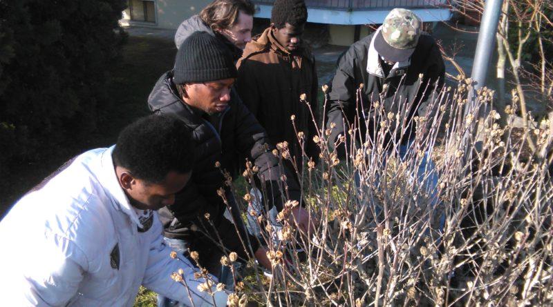 Quattro giovani giardinieri: dalla teoria alla pratica al Giardino Botanico.
