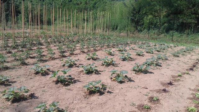 """Roots"""": al via il progetto di orto-terapia di Cambalache al Forte Acqui"""