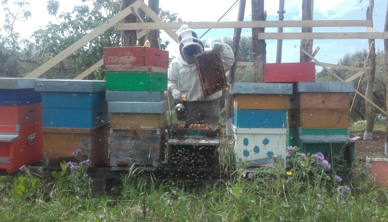 Quando la salvezza si chiama miele. Con MEDU e il progetto Terragiusta 5 nuovi apicoltori dalla tendopoli di Rosarno sul modello di Bee My Job