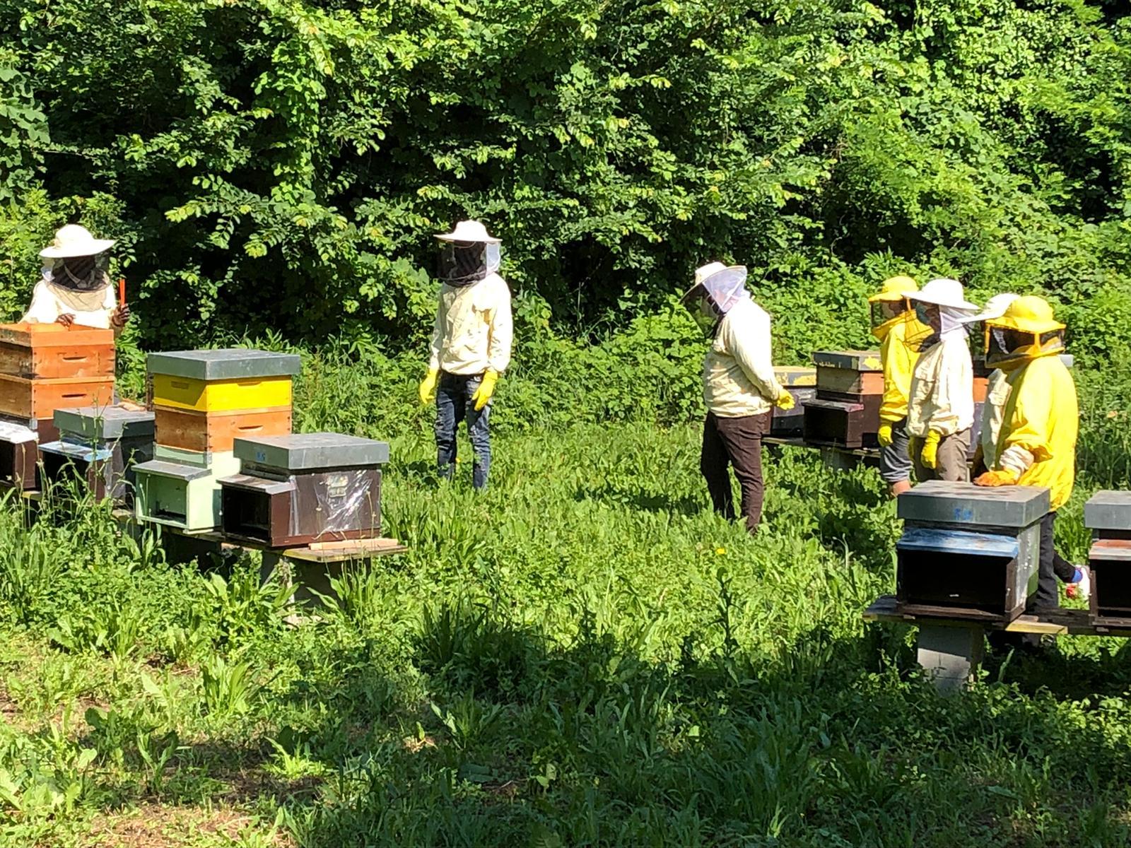 Madre Terra: un laboratorio di avvicinamento all'apicoltura e all'agricoltura