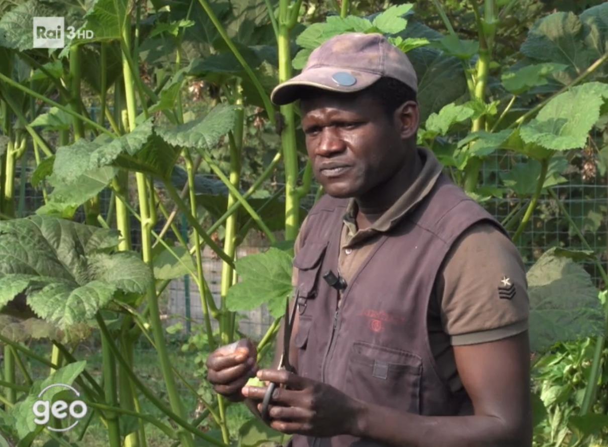Ortaggi esotici: le coltivazioni d'ocra di Abdoul in un documentario di Rai 3